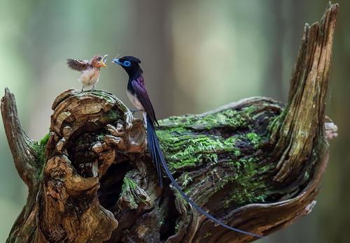 鳥たち1.jpg